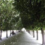 garden in the Palais Royale in Paris